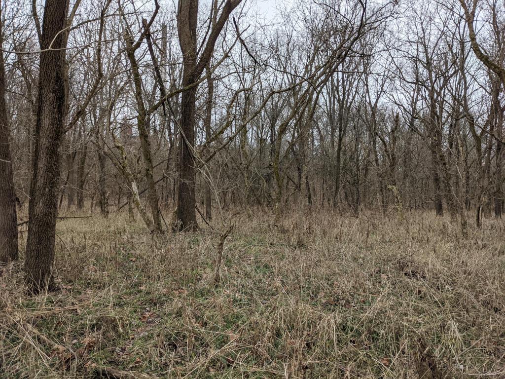 Flat area near Little Raccoon creek